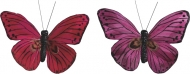 Butterfly Red/Pink