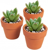 Small Terracotta Plant Pot : 3.8 cm Diameter : 3.8 cm Height